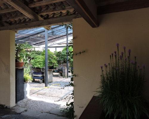 visita al giardino di Edoardo