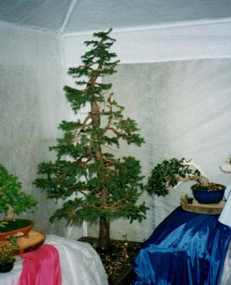 Ottobre 2000, Segusino