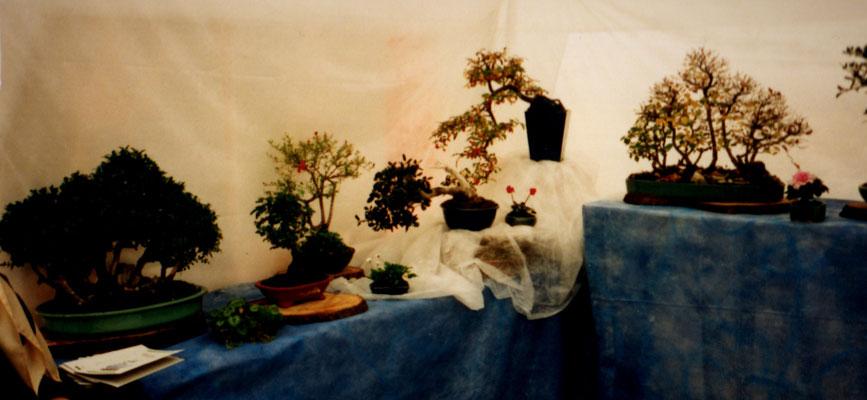 Ottobre 1999, Segusino