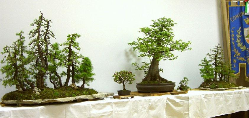 Cornuda 2007