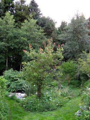 Waldgarten