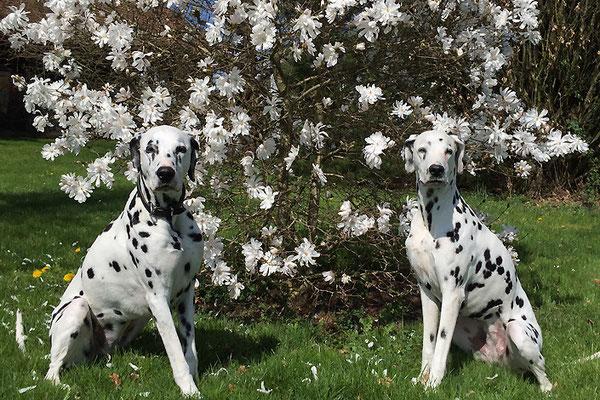 Diva und Schwester Donna posen um die Wette