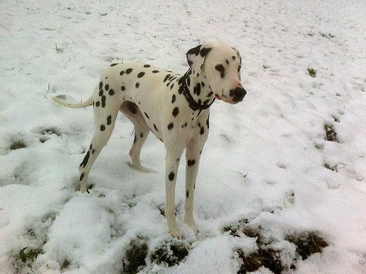 Spaziergang im Januarschnee