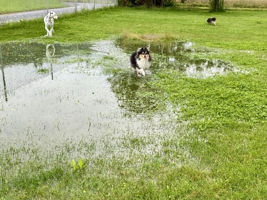 Gartenteich nach Dauerregen