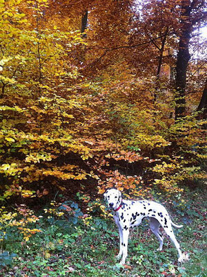 Spaziergang im goldenen November