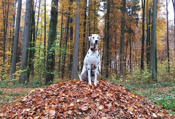 Goldener Herbst 2015