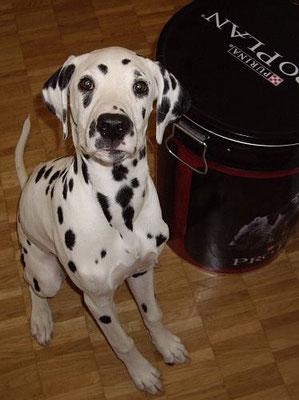 ich übe für Hundefutter-Werbung