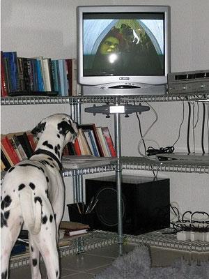 wieso läuft denn nicht 101 Dalmatiner im TV?