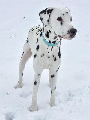 Spass im Schnee Ende Januar