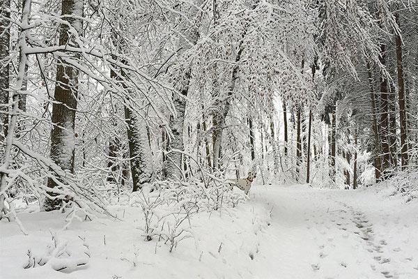 Schneespaziergang Ende Dezember