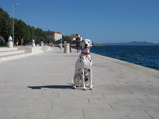 bei der Wasserorgel in Zadar