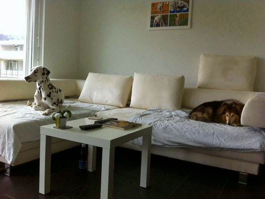 das Sofa gehört uns