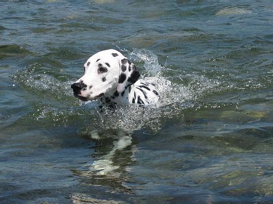 ich schwimme!