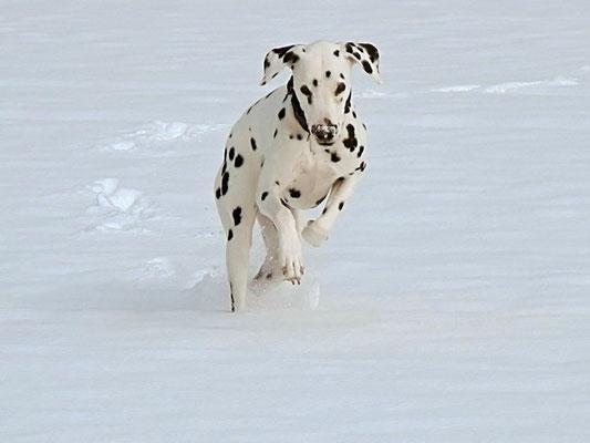 Springen im Schnee macht Spass