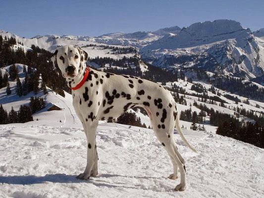 Gipfel erreicht! (Schneeschuhtour im Februar 2012)