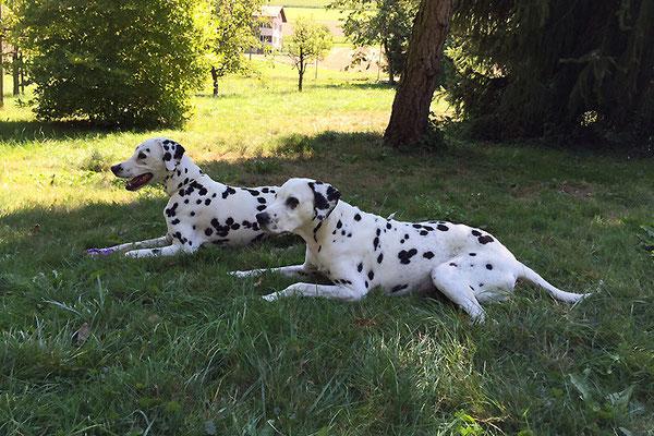 auf der Lauer: zwei Gartenwachhunde