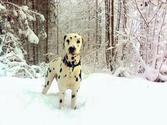 wir versinken im Schnee eine Woche vor Weihnachten