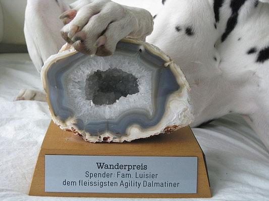ausgezeichnet als fleissigster Agility Dalmatiner 2011