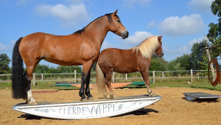 Edelstahlwippe für bis zu 2 Pferde