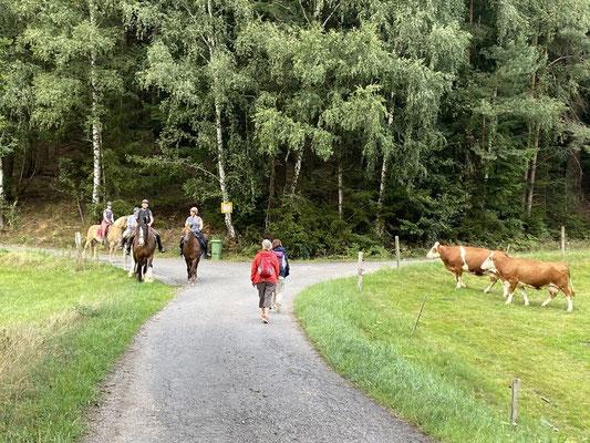 Hier treffen sich Wanderer mit Reiterinnen und Kühen