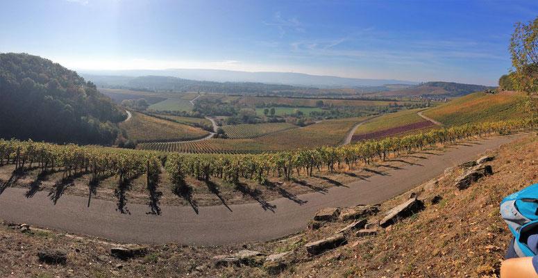 Wir staunen über die Weite des Weingebietes