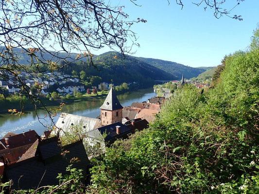 Blick auf Hirschhorn