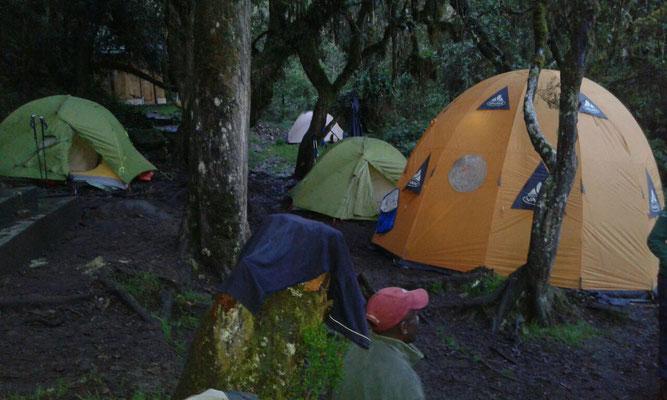 Umbwe Cave Camp mitten im Urwald auf 2.930 m