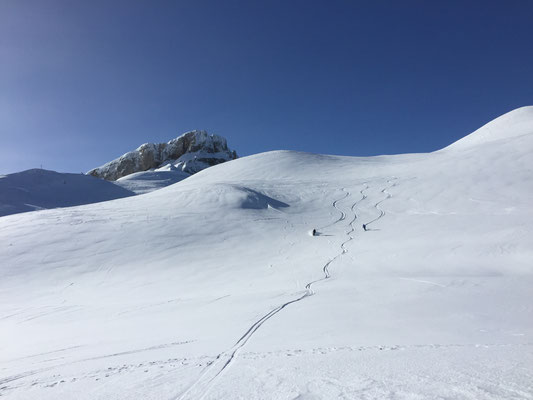 Freeride and Powderspaß