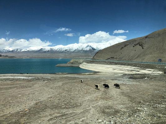 Karakol See