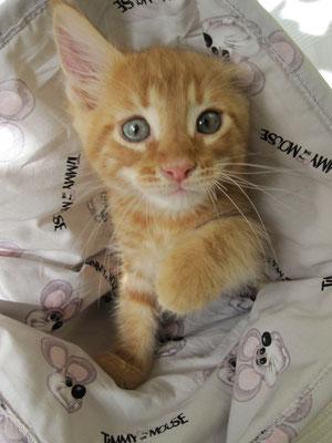 Moksi als kitten
