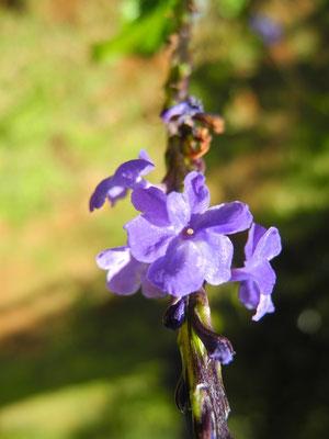 Heute übe ich die botanische Makroaufnahme mit unserer Kamera.