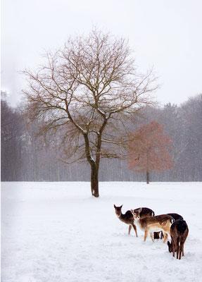Winter im Niendorfer Gehege
