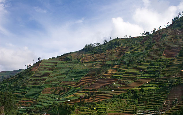 Terrassenfelder auf dem Weg zum Dieng Plateau - hier wird Gemüse angebaut