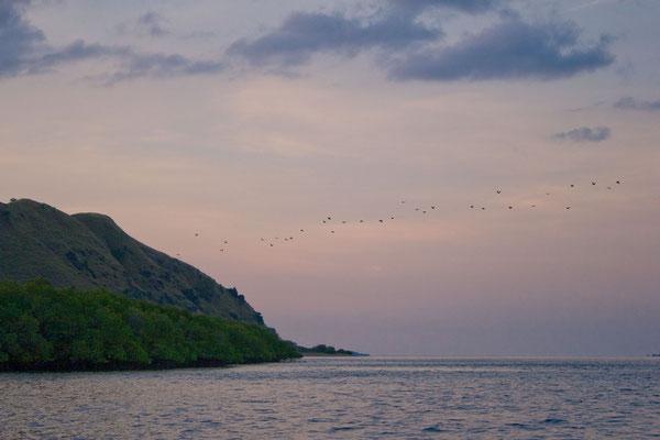 Ankerstopp vor Komodo, wo sich in den Mangrovenwäldern eine riesige Kolonie Flughunde befindet, die bei Einbruch der Dunkelheit zu ihren Futterplätzen aufbrechen.