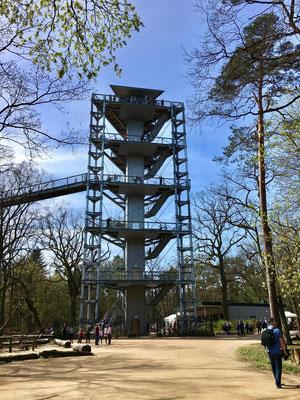 Baumkronenpfad Beelitz Heilstätten - Auf dem Areal der ehemaligen Lungenheilstätten ist ein 320 Meter langer Baumkronenpfad entstanden.