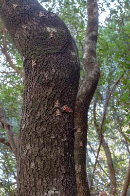 Dieses Gebiet ist ein seltener Lebensraum, der den Schmetterling Panaxia Quadripunctaria beherbergt, welcher in diesem einzigartigen Naturpark in der