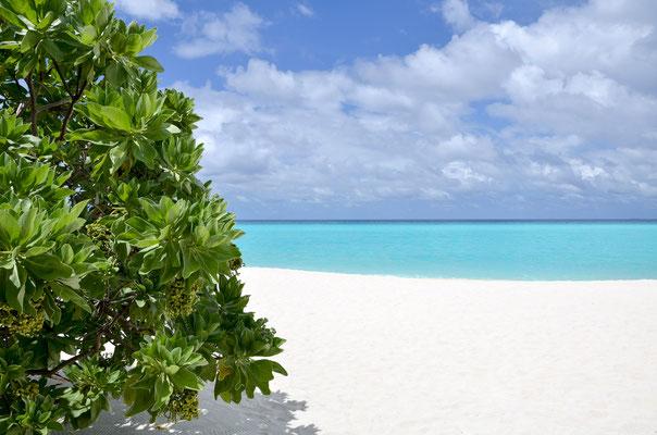 Blick vom Bungalow - viel Privatsphäre mit eigenem Strandabschnitt