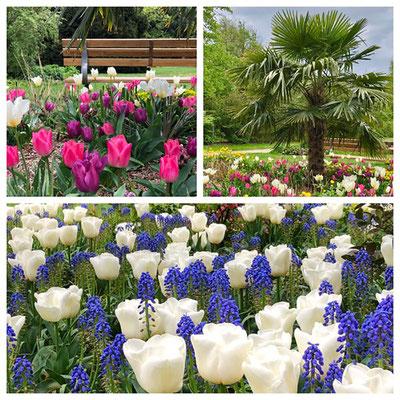 Eine Oase der Entspannung und ein kleines Naturparadies: der Botanische Sondergarten Wandsbek. Auf 1,5 Hektar versammelt er viele botanische Raritäten.