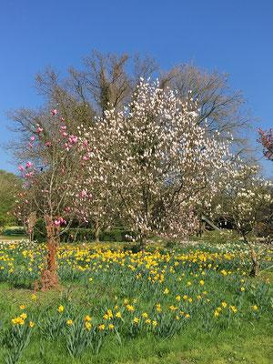 Arboretum in Ellerhoop - Norddeutsche permanente Gartenschau