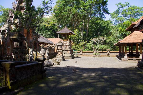 Schöne Anlage mit ca. 600 freilebenden Affen in natürlicher Umgebung