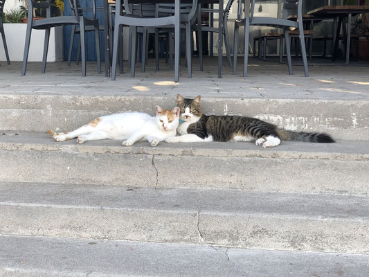 Cats in love...