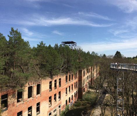 Die Konstruktion spannt sich auch über die Ruine der Frauenklinik, auf deren Dach inzwischen selbst ein kleiner Wald wächst.