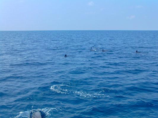 Delfine begleiteten unsere Schnorchelboot-Tour. Diese Tour gab es 2 x täglich kostenlos.