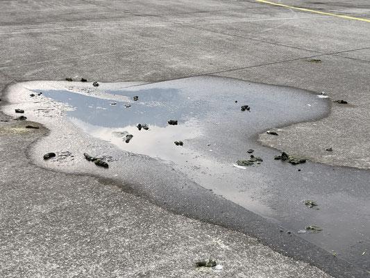 Wasserlache mit Schwanenkot auf dem Flugfeld