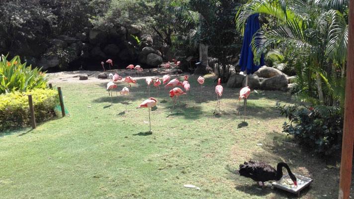 Flamingos© Ben Simonsen