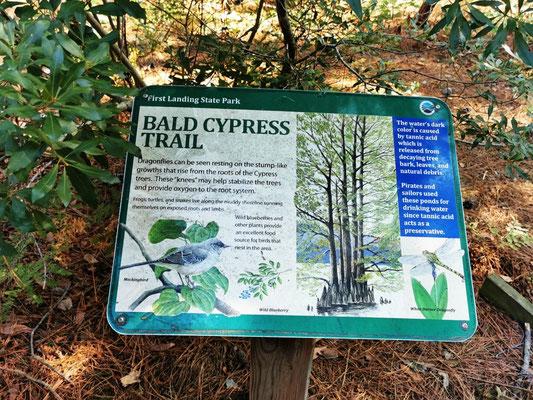 Bald Cypress Trail © Ben Simonsen