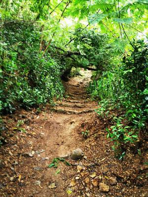 Jack's Walk Trail © Ben Simonsen