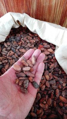 Kakaobohnen © Ben Simonsen