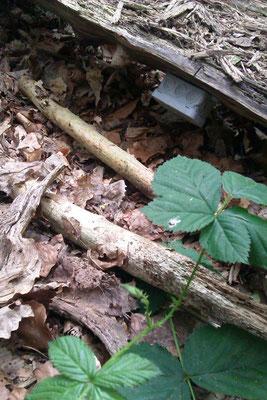 Eine Verteilerdose im Wald?