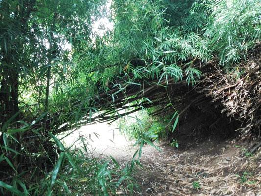 """Bambus """"Torbogen"""" © Ben Simonsen"""